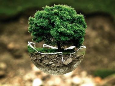 environnement arbre cap 2030